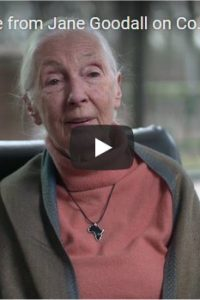 A video message from Jane Goodall